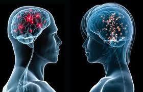 عقول النساء أكثر كفاءة من الرجال - University Journal