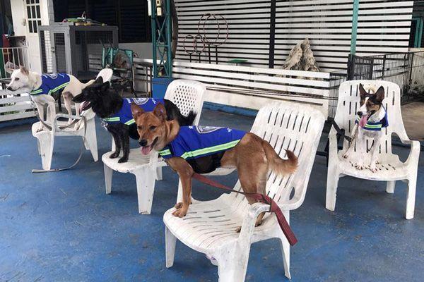 """""""سترات ذكية"""" تحول الكلاب الضالة في تايلاند إلى حراس للشوارع - صحيفة الجامعة"""