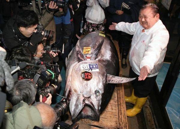 بيع سمكة تونة بـ 1.8 مليون دولار في مزاد السنة الجديدة - صحيفة الجامعة
